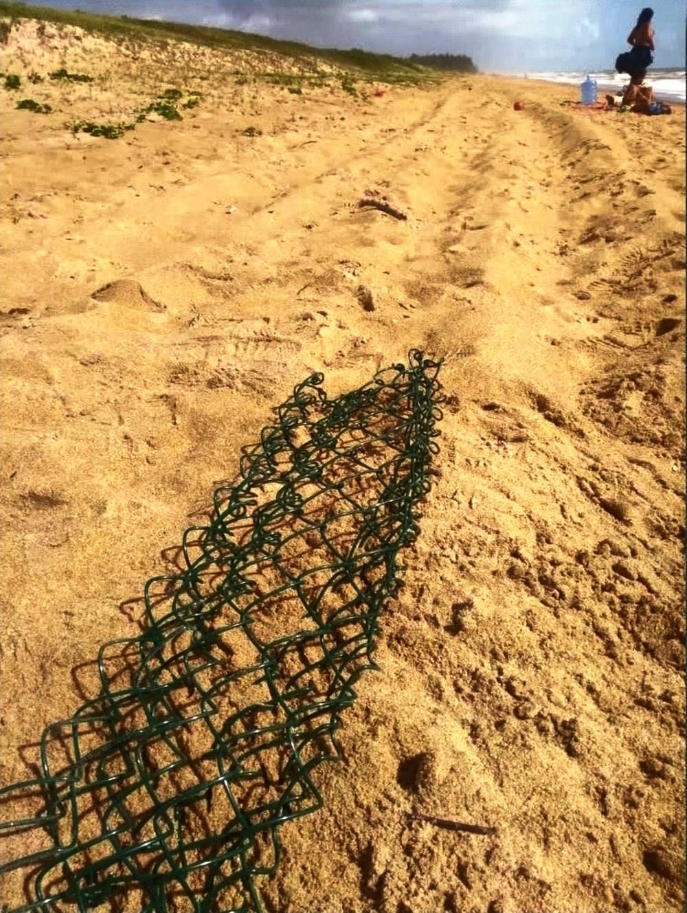 Filhotes de tartaruga são encontrados mortos depois de carro passar por cima de ninho, em Guriri, no ES