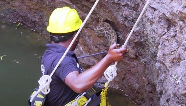 Homem se arrisca em poço para resgatar cobras venenosas