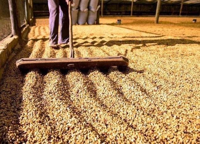Secretaria da Fazenda realiza operação para proteger produtores de café no ES